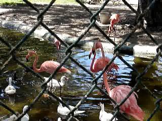 Zaterdag 30 juli 2005, Luchiano & CasaSpider visit the Curacao Zoo