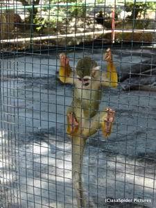 Een aap hoort natuurlijk niet in een kooi... Klik op de foto voor groter