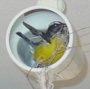 Vogels bouwen nest in spot van CasaCasa